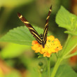 Butterfly — Stock Photo #13281642