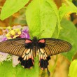 Butterfly — Stock Photo #13281839
