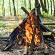 Forest   bonfire recreation - Stock Photo
