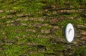Green nature energy — Stock Photo