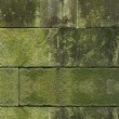 Moss green grass background texture design - Stock Photo