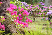 Lush landscaped garden with flowerbed and colorful plants — Stock Photo