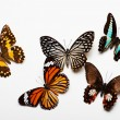 Stok fotoğraf: Butterflies Collection