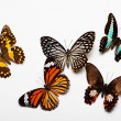 Butterflies Collection — Stockfoto #30839893