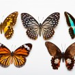 Photo: Butterflies Collection