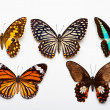 Butterflies Collection — Foto de Stock