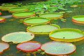 Water-platter — Stock Photo