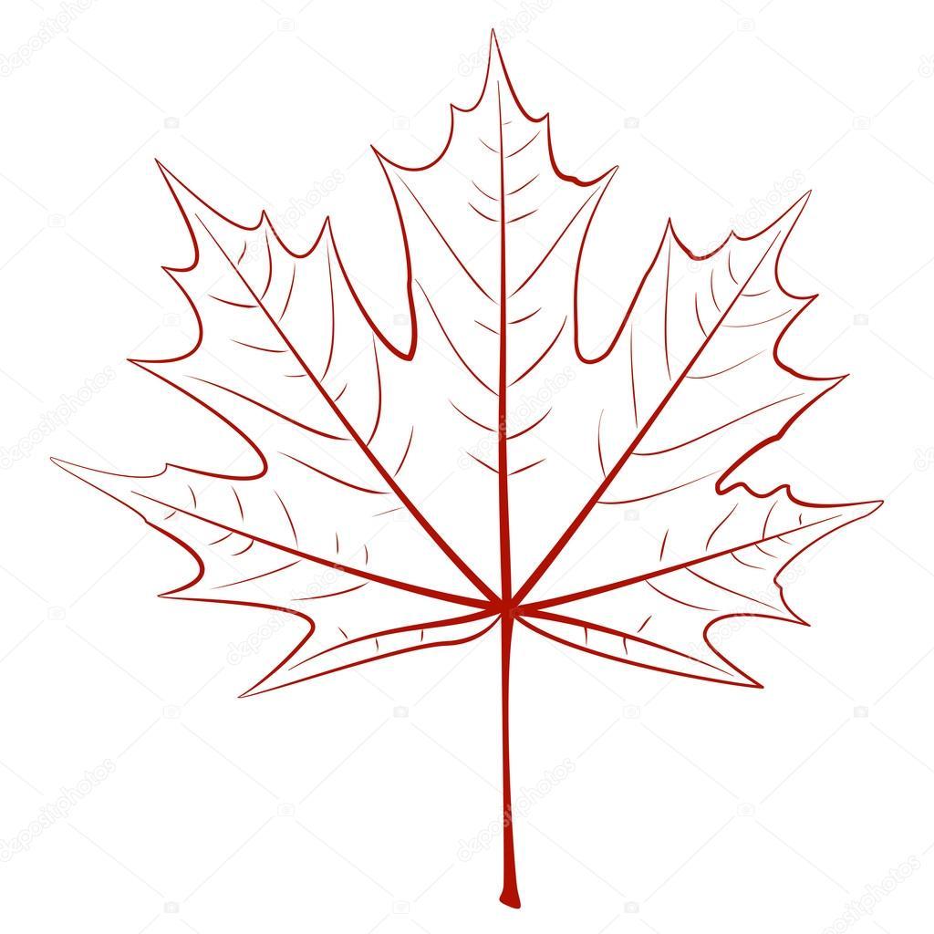 Листья клена рисунок схема