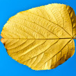 Leaf and Sky — Stock Photo