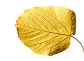 Geïsoleerde geel blad — Stockfoto