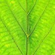 Green Leaf Background — Stock Photo #13475314