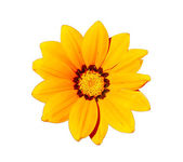 Yellow Flower Head — Stock Photo