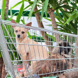 Stock Photo: Dogs In Cart