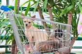 Dogs In The Cart — Stock Photo