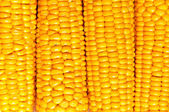 Corn Background — Stock fotografie