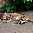 Sleeping Street Cat — Stock Photo #30179457