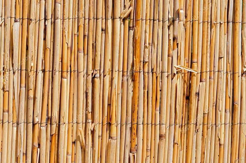 Akazien zaun — Stockfoto © benjaminlion #37554119