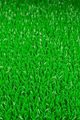 Artifical Grass Background — Stock Photo