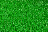 Artifical Grass Texture — Stock Photo