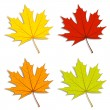 Maple Leaves — Stock Vector