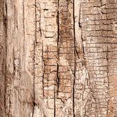Dry Wood Color — Stockvektor