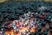 Grosella negra — Foto de Stock