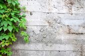 Concrete And Green — Stock Photo