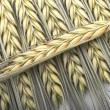 Wheat ear — Stock Photo #12532125