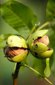 Fruit concept — Stock Photo