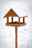 Birds in hand made animal feeder — Stock Photo