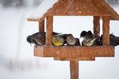 Zima zwierzęta — Zdjęcie stockowe