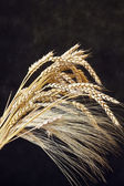 Wheat ears on the dark wooden background — Stock Photo
