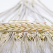 Stock Photo: Wheat ear comb