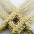 Wheat ear comb — Stock Photo