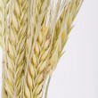 Wheat ear comb — Stock Photo #30530891