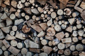 Dry wood tree — Stockfoto