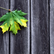 Leaf on wood — Stock Photo
