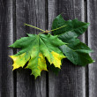 Leaf on wood — Stock Photo #32252073