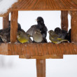 Winter feeder — Stock Photo
