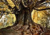 Beautiful park tree plane — Stock Photo