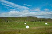 Icelandic farming landscape — Stock Photo