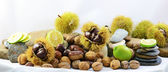 Chestnut, walnut and lemons with lined up rocks — Stock Photo