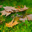 Stock Photo: Dried leaves