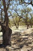 Darling River, Australia — Stock Photo