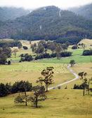 Tasmania Farming — Stock Photo