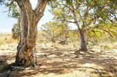 Australian Outback Oasis — Stock Photo