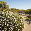 Stock Photo: Sand Dune Plants
