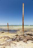 Okyanus direkleri — Stok fotoğraf