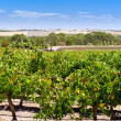Stock Photo: BarossValley