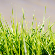 Grass Blades — Stock Photo #22574131